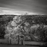 Image for the Tweet beginning: Fall foliage Warren CT: day