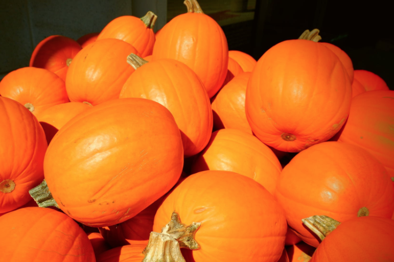 Pumpkins used for decoration are subject to Sales Tax. Pumpkins used for food or in food preparation are tax free.