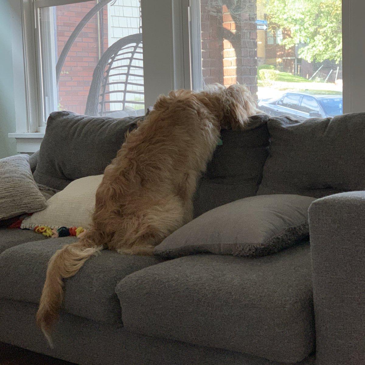 @McKenzieMNelson my dog, apparently