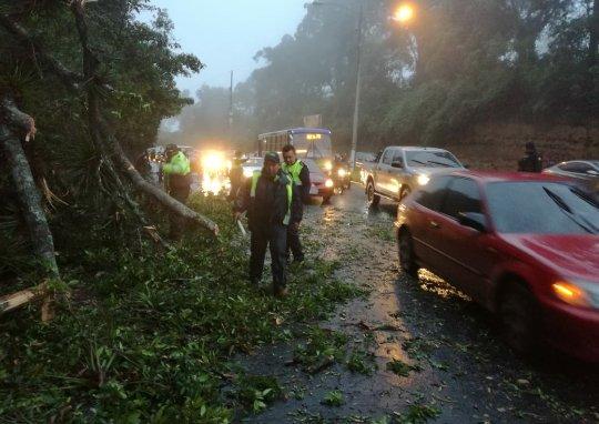 test Twitter Media - #AHORA Se reporta un árbol caído en boulevard El Naranjo zona 4 de Mixco. Autoridades trabajan en el lugar. https://t.co/rolAAPPce4