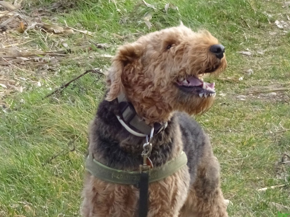 #Smile with me!  dogsarejoy <br>http://pic.twitter.com/7DEmoB8XtN