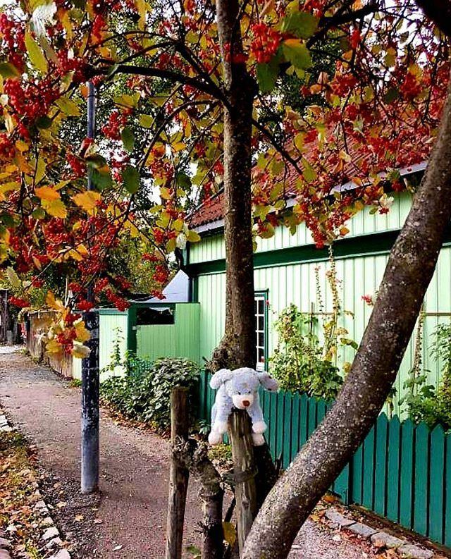 Chillin' in Maridalsveien, Sagene #oslo #visitoslo 😄🍁🍂🍂 Photo: @sigrunjorgensen ift.tt/2OPOrwh