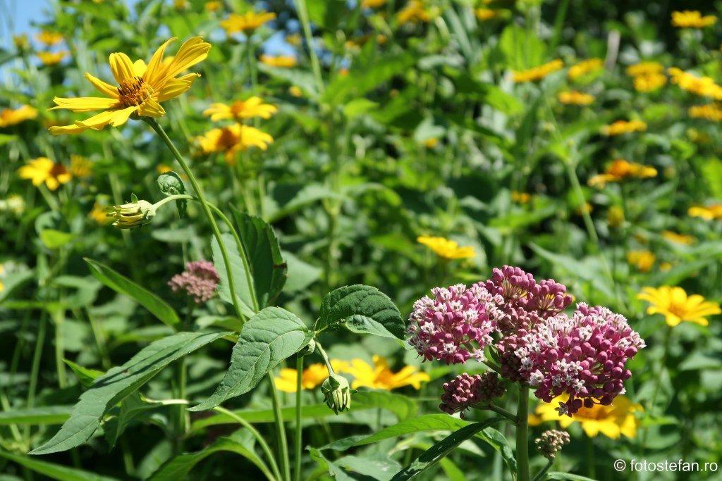 Some of the flowers on Governors island #NewYork #fauna #traveldiaries #exploretheglobe #traveldeeper #Video https://youtu.be/N0LkXscec9w