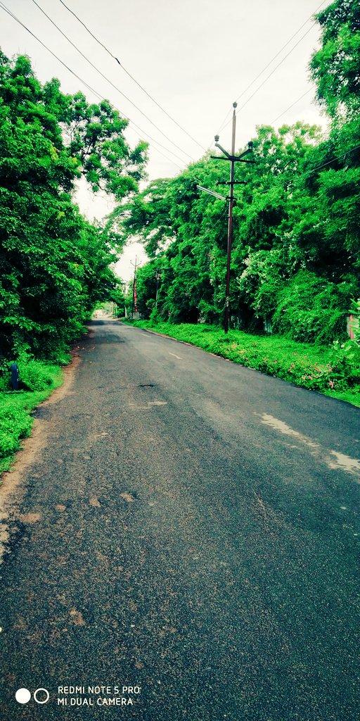 #My fav road recent days ... #savetrees  #WednesdayWisdom
