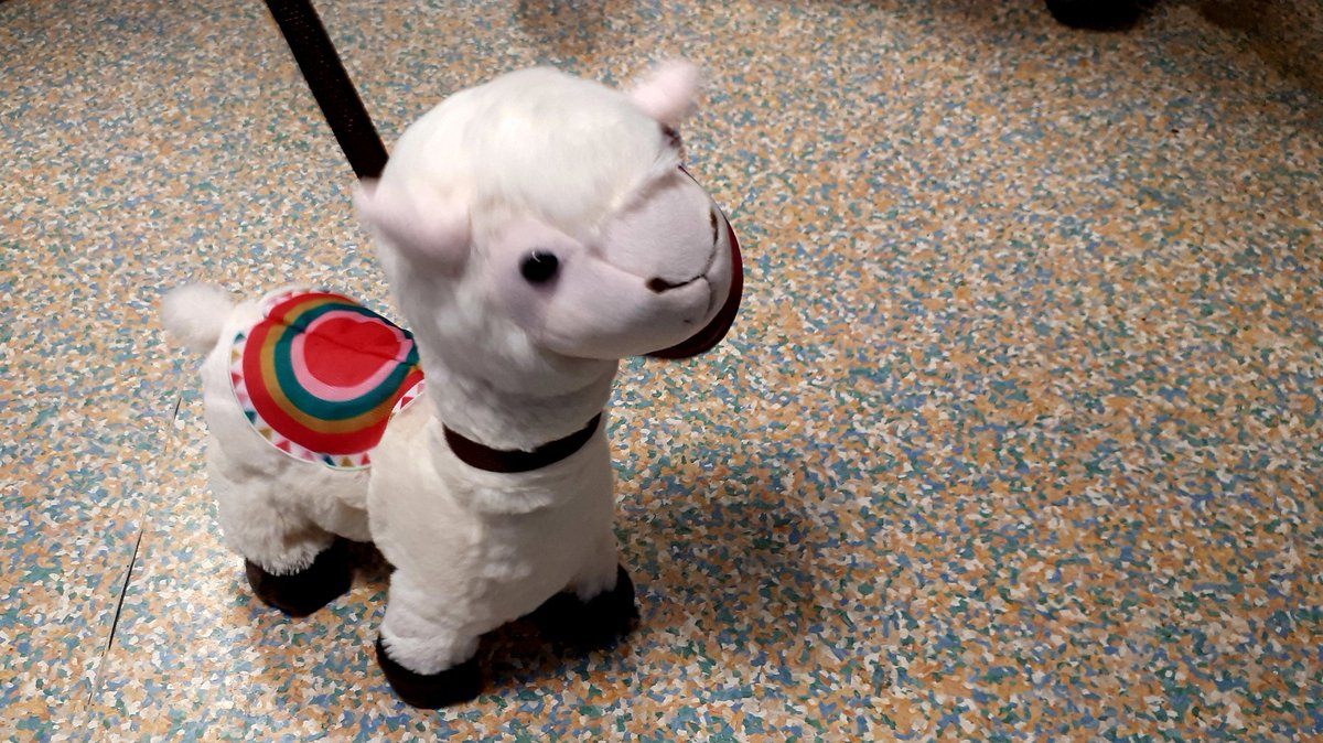 This little singing + dancing llama who accompanied the @CUH_NHS management team on their visit to paeds ED this evening was definitely a highlight of my day and also cheered up several of my young patients. Sometimes laughter really is the best medicine! #PaedsRocks #PaedsED