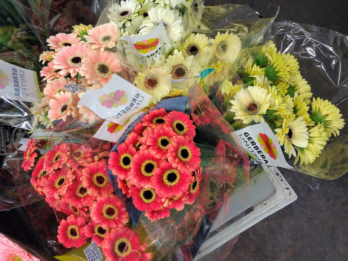 Check out these Piccolini germinis (gerbera daisies). Perfect for corsages and boutonnieres!  #MKEFlowerMarket<br>http://pic.twitter.com/r0rGlO5UEg