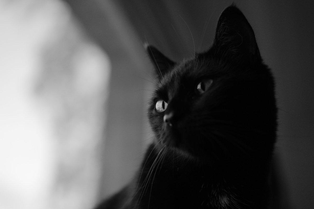 credit to Mark Rimmel at https://unsplash.com/@markrimmel  #cat #cats #catlover #catlovers #catoftheday #catlife #catlove #unsplash