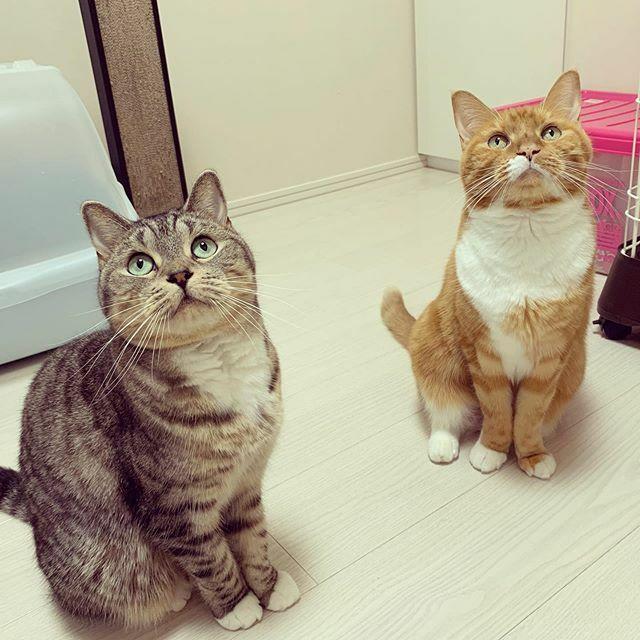 #cat #catstagram #catsofinstagram #instacat #猫 #猫のいる生活  #猫部 #猫のいる暮らし #ねこ様 #ねこ部屋 #ねこすた https://ift.tt/2OQfibO