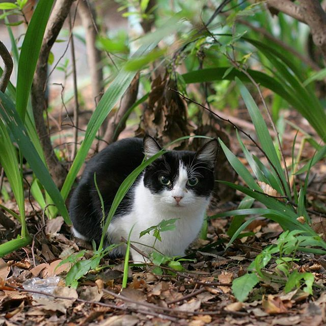 薄暗い朝 瞳がクリクリ #ねこ #猫 #cat #gato #chat #外猫 #straycat #猫好きさんと繋がりたい #cute #cutecats https://ift.tt/32kK5Bj