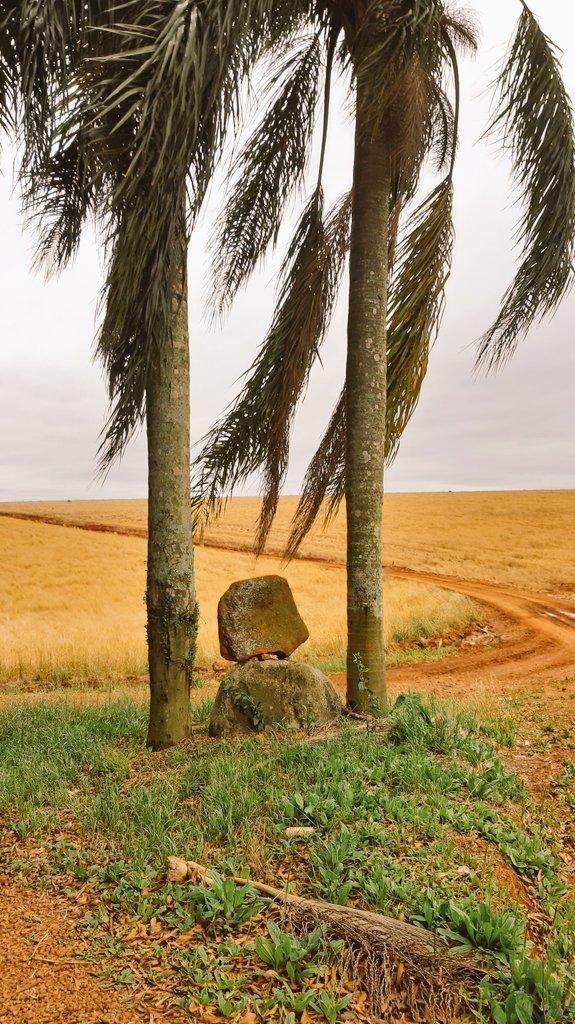 Andando e fotografando por aí #Marau #fotos #RioGrandedosul #natureza #plantações #aveia #pedras #árvores #gratidão #pictures #nature