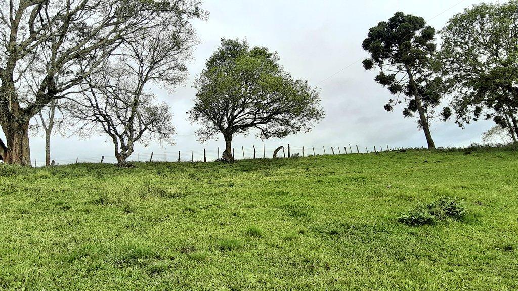 Andando e fotografando por aí! #Marau  #fotos #RioGrandedosul #árvores #natureza #beleza #armonia #pictures #nature #tree #natureza_linda #natureza_Brasil #natureza_perfeita #love