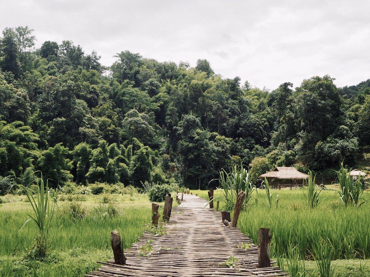Bamboo bridge #travel #travelphotography #travelblogger #landscape #landscapephotography #nature #naturephotography #olympus #olympusphotography #olympusomd #littlekhayee #ခရီးလေး #rural #rurallife #bamboo #bridge #rice #farm #chiangmai #thailand #amazingthailand  #village #camp