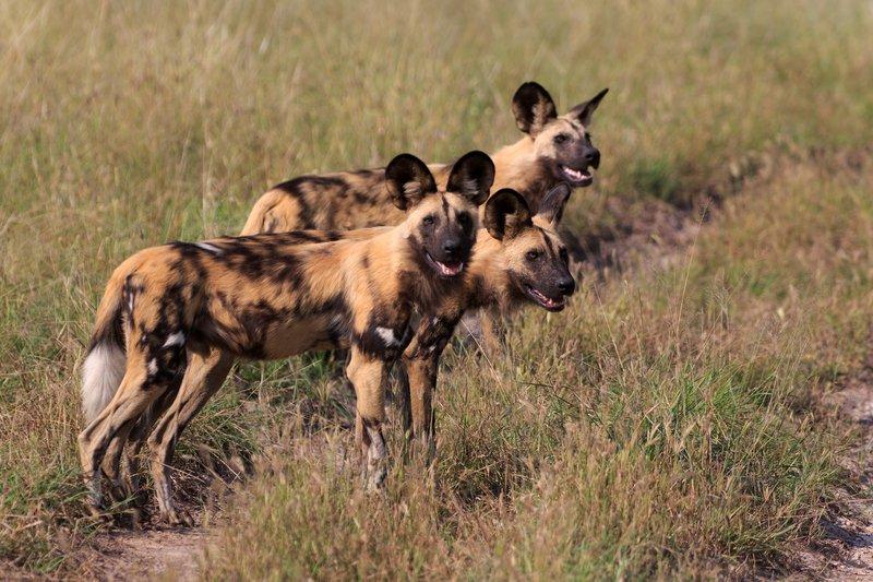 """Résultat de recherche d'images pour """"animals in chobe national park"""""""