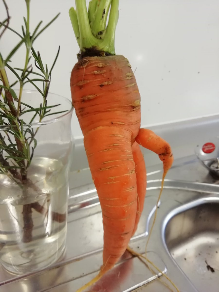 Brings a whole new meaning to dirty carrots 😂#dirtycarrots #vegporn #rudebotany @mr_plantgeek https://t.co/vZ3D5mhmj0
