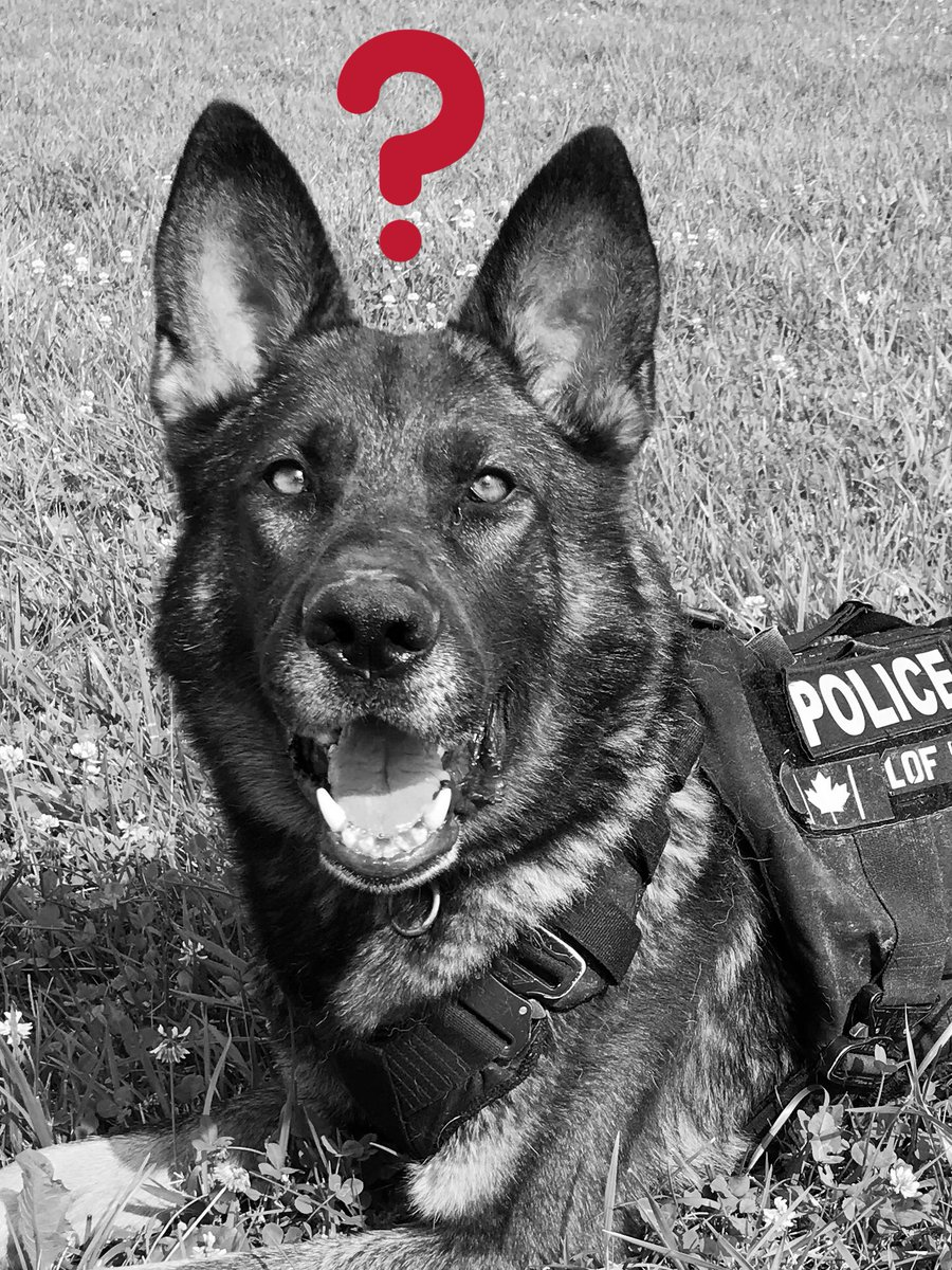 DRPS Canine Unit (@DRPS_K9) | Twitter