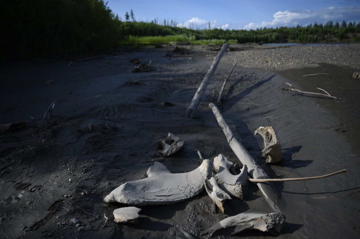 And then there's that rotting smell. As the permafrost thaws, animals and plants frozen for thousands of years decompose and send a steady flow of carbon dioxide and other gases into the atmosphere — accelerating climate change. wapo.st/2oQtHtD