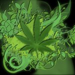 Image for the Tweet beginning: #GodzWeedz #StonerFam #TNBNaturalsSponsoredGrower @tnbnatural #DontPanicItsOrganic