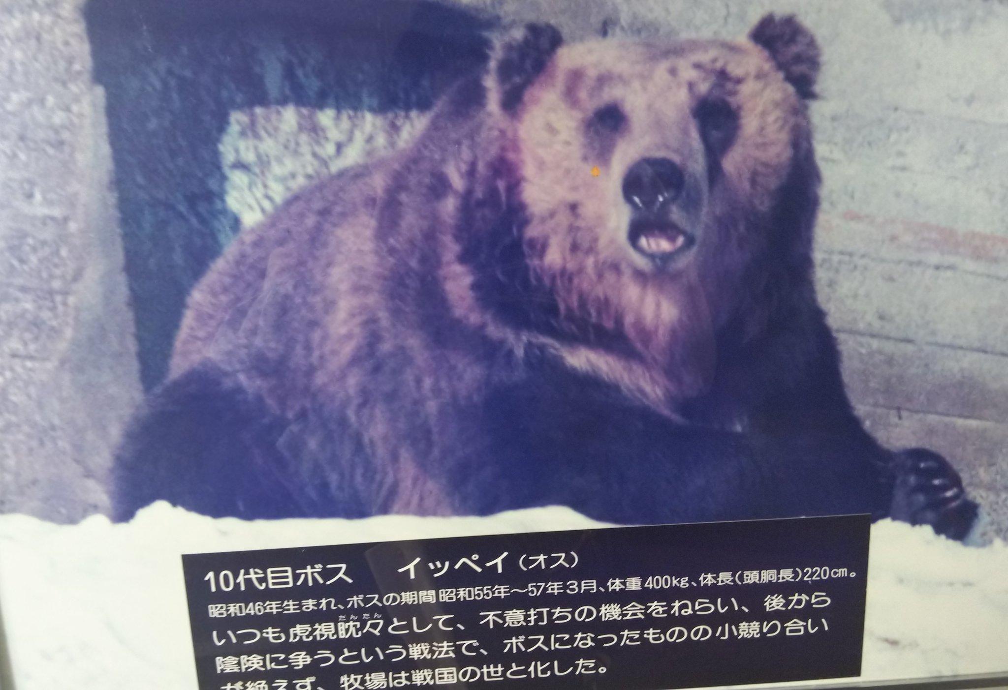 登別の熊牧場行ってきたんですが、歴代ボスの紹介がめちゃくちゃ面白かったので宣伝したい