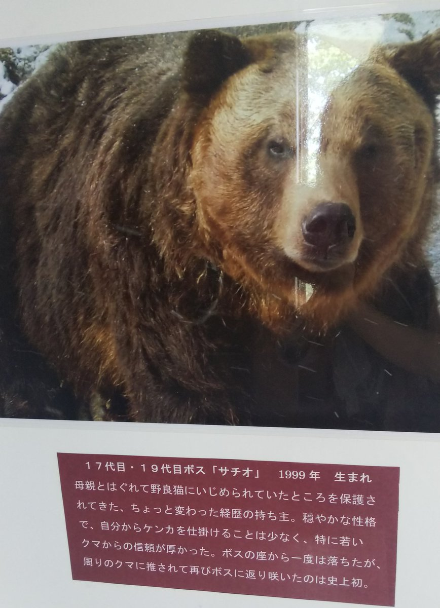 いじめ 熊 中世のロンドンで行われていた見せ物「熊いじめ」にはどんな犬が使われていたのか?(仙台市民図書館) |書誌詳細|国立国会図書館サーチ