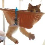 まるで別の生き物!穴の空いたハンモックに猫が収まった結果!
