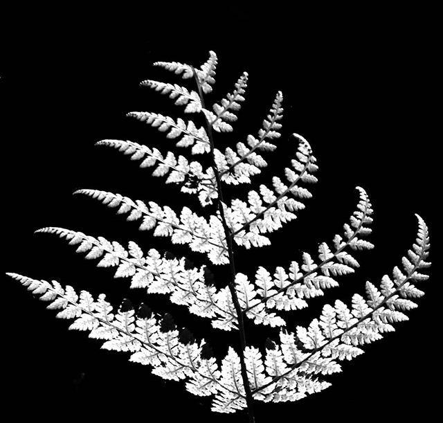 Light & Shadow ——— #myweekofdarkandmoody #visitpembrokeshire #bnw_inst #bnwlightandshadow #bnw_art #mnml #bnw_artstyle #bnwminimalism #bnwmoods #moodygrams #moodnation #abstractphotography #photographize #fineartzone… https://fotorichter.wordpress.com/2019/10/05/light-shadow-myweekofdarkandmoody-visitpembrokeshire-bnw_inst-bnwlightandshadow-bnw_art-mnml-bnw_artstyle-bnwminimalism-bnwmoods-moodygrams-moodnation-abstractphotography/…pic.twitter.com/TUG2mX34cP
