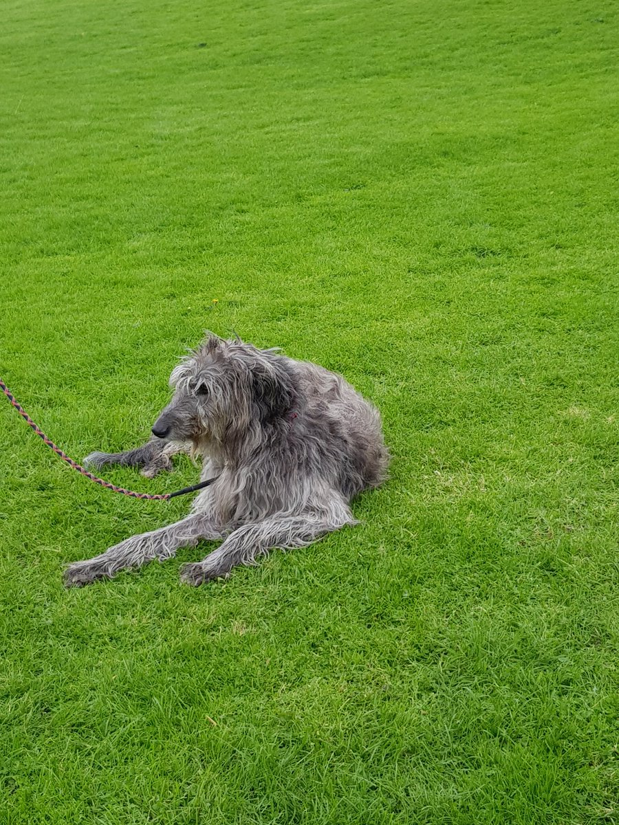 @fidelmacook @joannaccherry @BorisJohnson Angus the Scottish Deerhound was on todays march. He was subject of many photos and cuddles and ear rubs. He just wanted to lie down