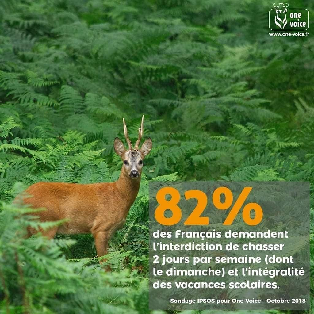 Stop à la chasse  #STOPindustrieDuMeurtre #stopchasse #chasseur #maltraitanceanimale #foret #animauxsauvage  #horreur #maltraitance  #selfie #liberation #liberationanimal #horreurpic.twitter.com/kELhzRvInu