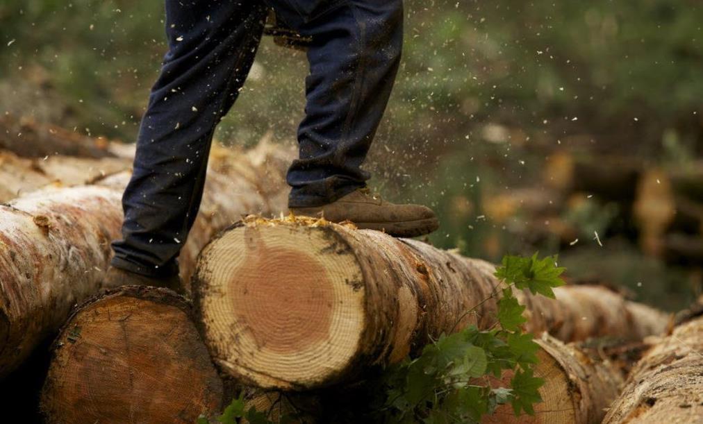Лес лесорубы картинка