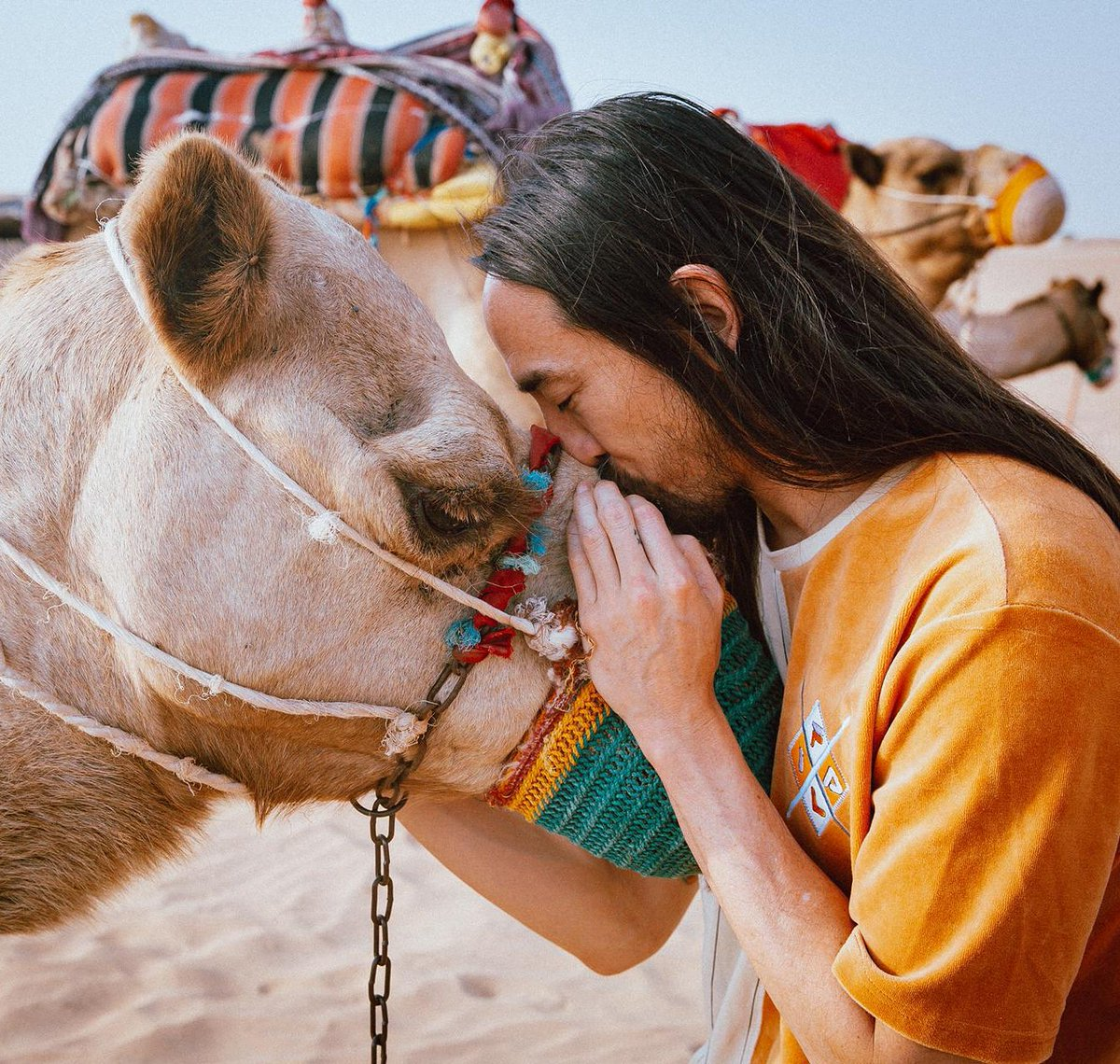 *adds fluent in camel* to my resume*