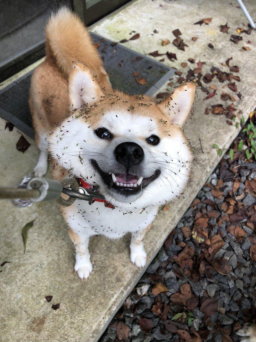 おはなおけいこん@愛犬垢さんの投稿画像