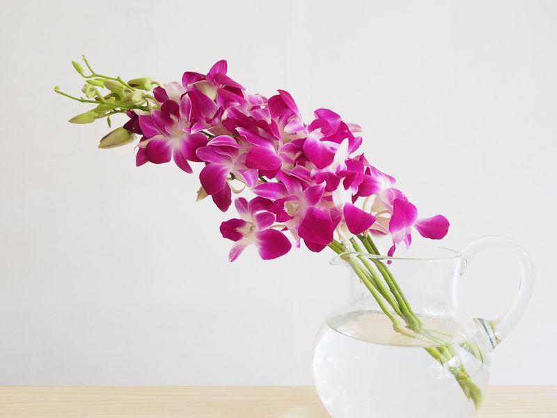 【お花屋さんの切花図鑑】  ●デンファレ  一年中出回るランの代表選手。タイなどからの輸入品が多いが国産品もある。国産ものはちょっと高価。  一輪水に浮かべたり料理に添えたり、どこかで見たことがある人も多いはず。  #切花図鑑 https://t.co/poqXLqm4le