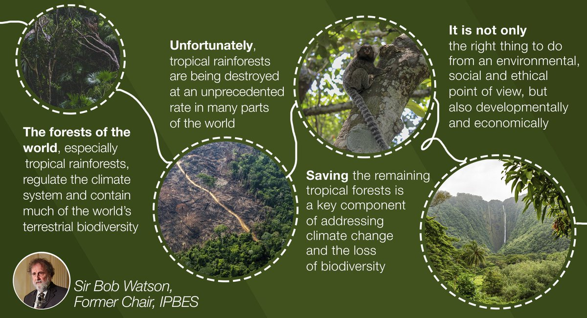 🌴The tropics are home to the highest levels of #biodiversity in the🌎, but have also experienced the greatest loss of intact #ecosystems 100 mil. ha deforested (1980-2000) #ClimateChange, land-use change and direct exploitation create combined risks —@IPBES #GlobalAssessment
