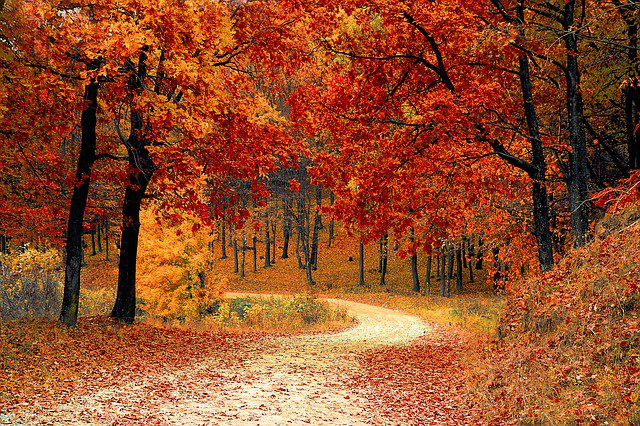 Autumn has now arrived, so beat the rush and book your #transcription projects now! Whether you have a #HR hearing, pharmaceutical ad board or research project you need transcribing, we can help! Contact +44 01707 260027 https://t.co/PCkSRMDZzm