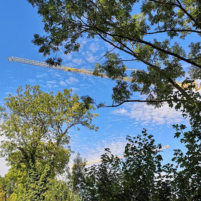 #kirchheimteck #badwiesen #badenwürttemberg #deutschland #suchbild #nature #yellowcrane #cranelife #cranebrotherspic.twitter.com/nuz4yfuGyz