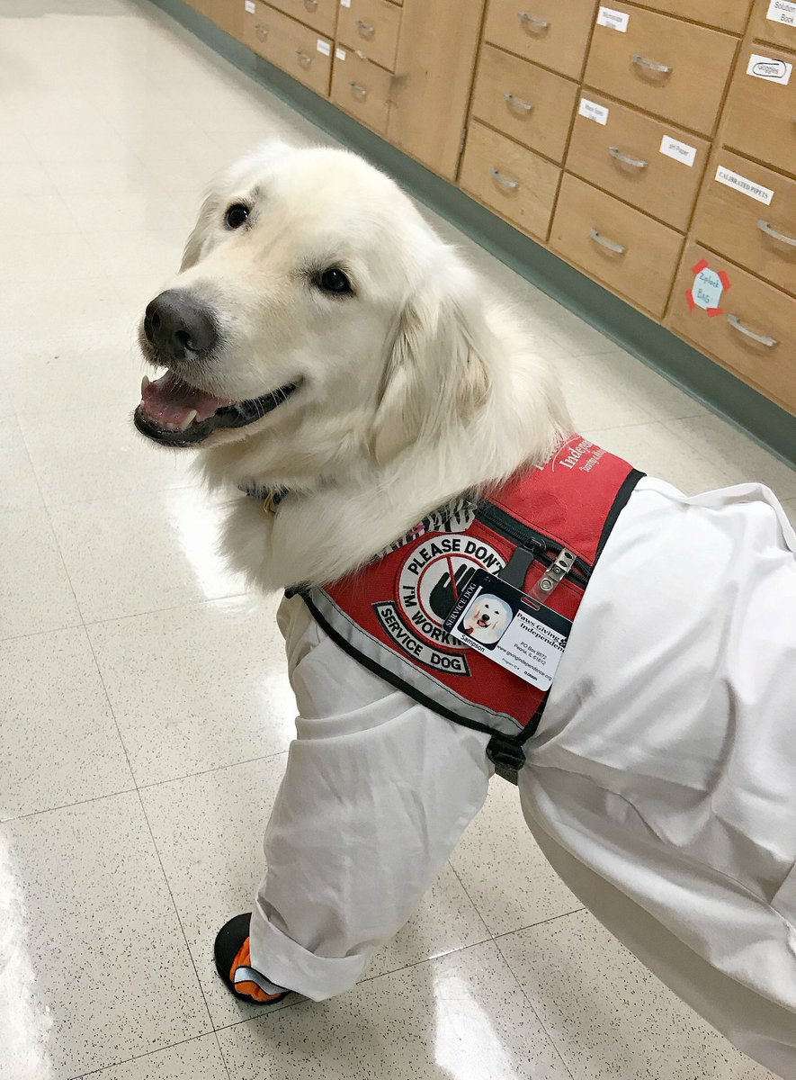 """Sampson the Service Dog on Twitter: """"I am a service dog. My mom is a  scientist and works hard. I go to work with her in the lab and help her stay"""