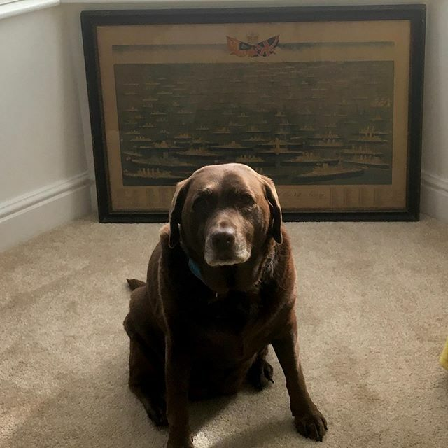 Mia hangin' with her favourite picture of ships . . . #olddognewships #elderlypupper #chocco #mia #labrador #elegant #dogsofinstagram #smoothhead #mikeysescapades #croydon https://ift.tt/2ARK4J1 pic.twitter.com/WfOaMhLZZN