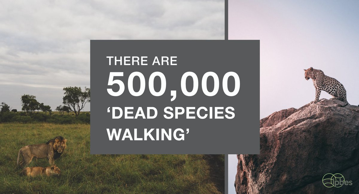 Dead Species Walking 9% of our estimated 5.9 million terrestrial #species have insufficient habitat for long term survival🐾 Habitat restoration could save many species, if soon after the original loss or degradation of habitat #WorldHabitatDay —@IPBES #GlobalAssessment