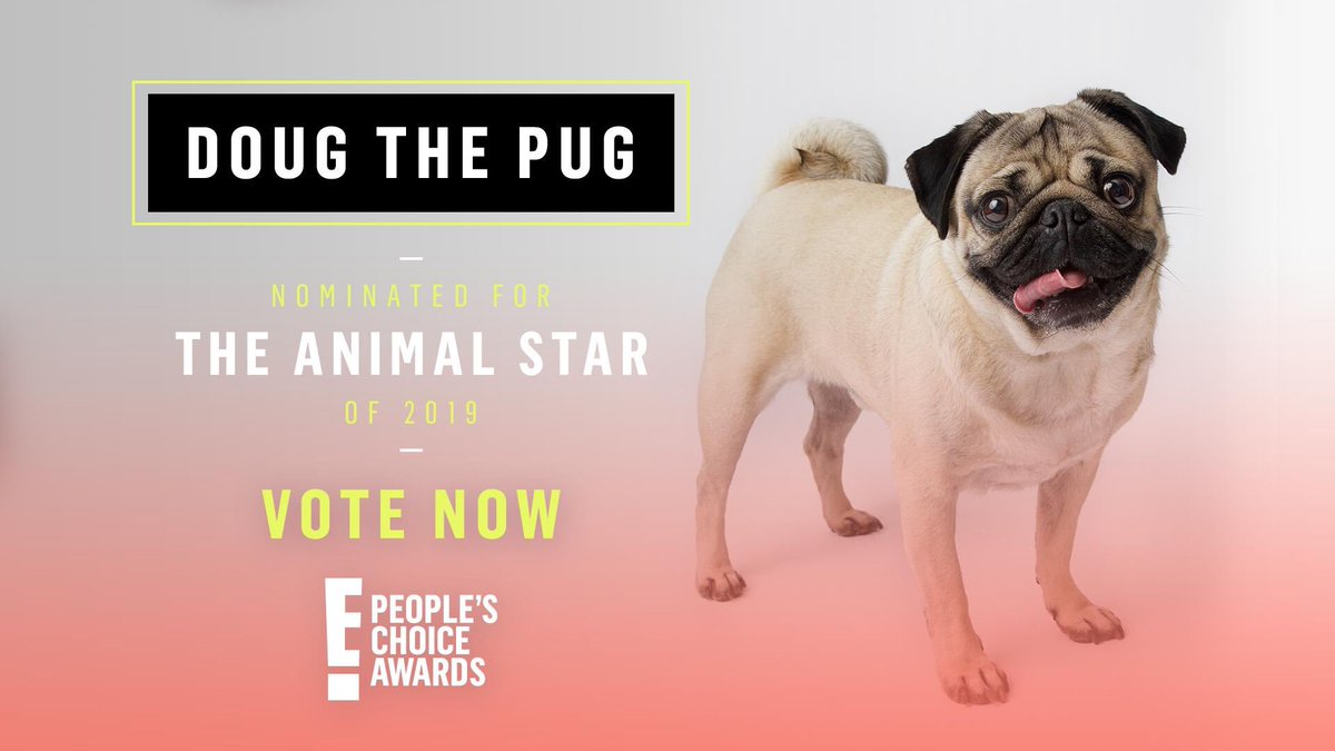I am so thankful to be nominated for #TheAnimalStar at the #PCAs! Keep voting for me at the link below or just RT this tweet. Spread happiness 🐾 #DougThePug pca.eonline.com/pop-culture/th…