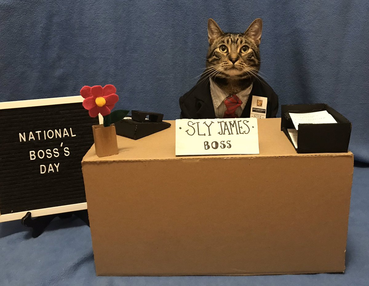 Sly James The Cat On Twitter October 16th National Boss A Day Slydoesholidays Catsoftwitter Nationalbossday Nationalbossesday