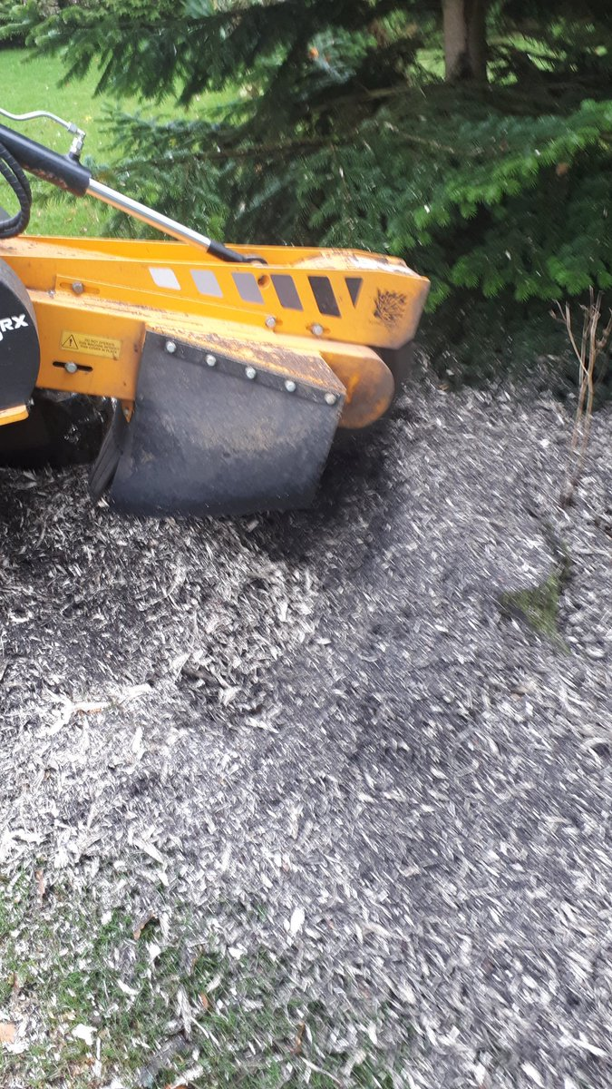 Stump grinding a mixed hedge at Wickham St Paul, Sudbury, Suffolk. We can help you with all your tree stump removal need…