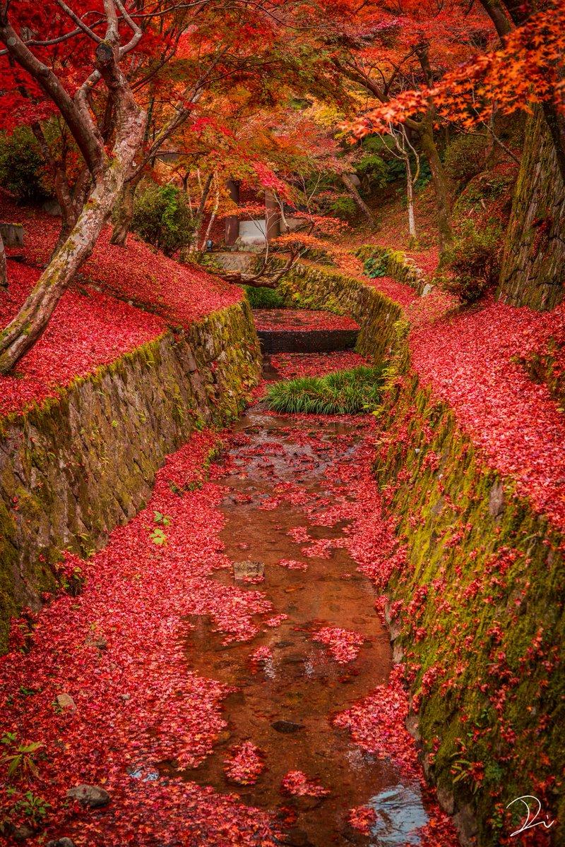 敷き紅葉と東福寺。紅葉に染まった川が美しい。
