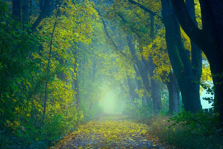 """""""Some beautiful paths can't be discovered without getting lost."""" Erol Ozan. Wishing all an outstanding day. #WednesdayThoughts  #inspiration<br>http://pic.twitter.com/k580syIe5D"""