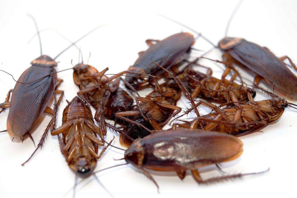 Картинка тараканы и мыши