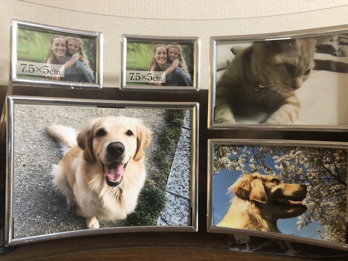 犬猫の写真飾ってる写真立てに初期装備のフリー素材外国人が混在したままだったの、まめきちまめこの家で一番爆笑した事案だった。