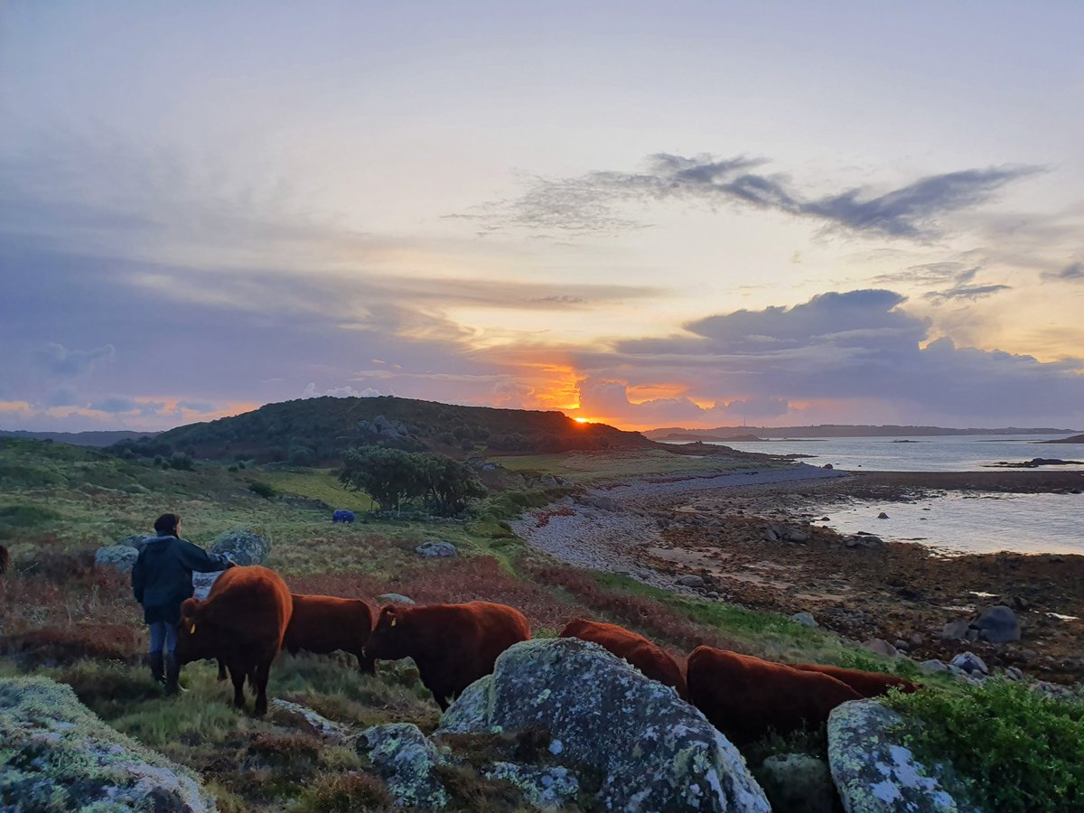 It's never a chore to check on the cows when you get a view like this! #islandlife #bryher #islesofscilly #conservation #cows #cowsofinstagram #cornwall #ioswildlifetrust #cornwallwildlifetrust #scillywildlife #sunrise<br>http://pic.twitter.com/BZf5vra4Xt
