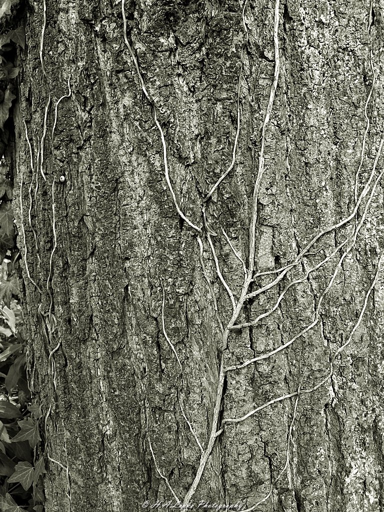 Lebenslinien #lifelines #swfoto #swfotografie #schwarzweissfoto #schwarzundweiss #bw #bwphoto #blackandwhite #blackwhite #bwphotography #blackandwhitephotography #Efeupic.twitter.com/7rqVH7iWLe