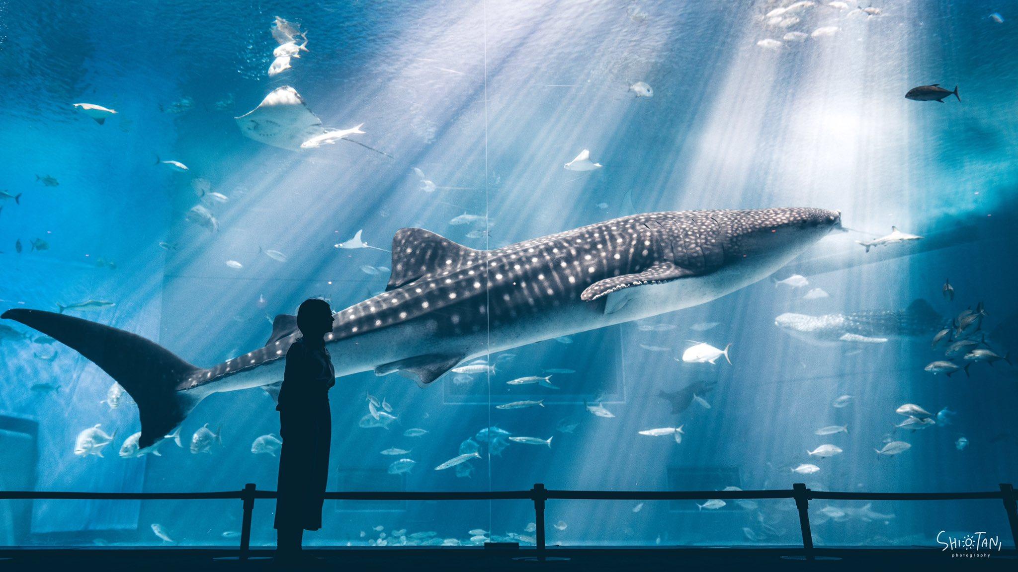 美ら海水族館を独り占めして撮った写真を見て欲しい