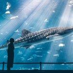 美しすぎる!沖縄の美ら海水族館での1枚が素晴らしいと話題