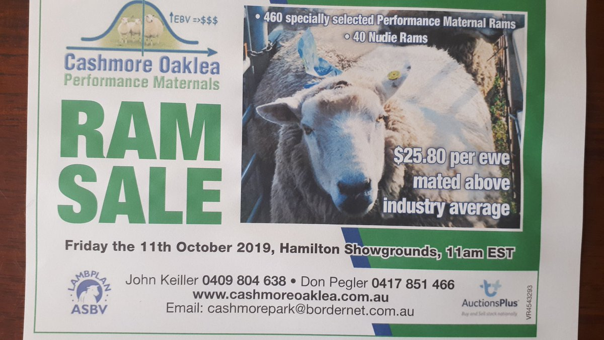 Cashmore Oaklea ram sale, Friday 11th October, Hamilton.  470 Maternals, all top 5%. Regards Johno K https://t.co/Xa43wCSqCQ