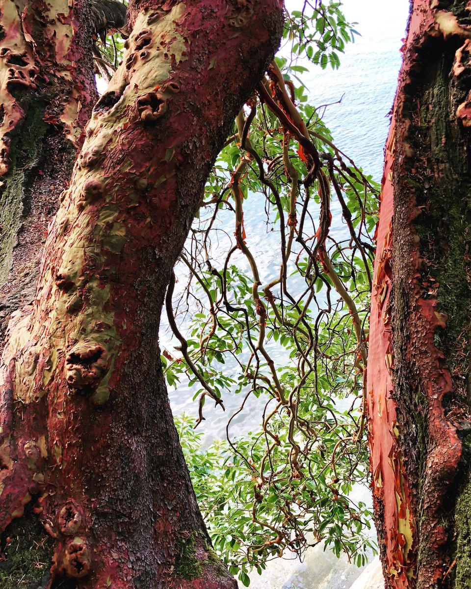 A nnE on Twitter: pay little heed to those who profess to know; those who are still learning have the most to teach  *reminder to myself  📷 a beautiful old arbutus reaching for the sea #myphoto…